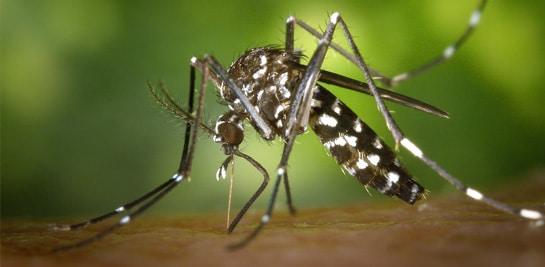 Schutz nicht nur gegen Mücken